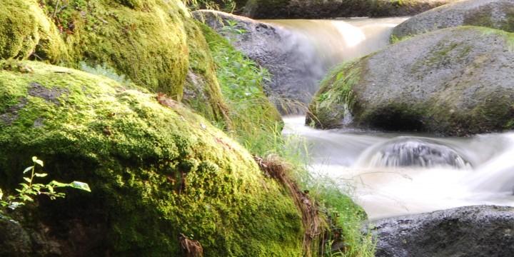 Urlaub im Waldviertel Steine